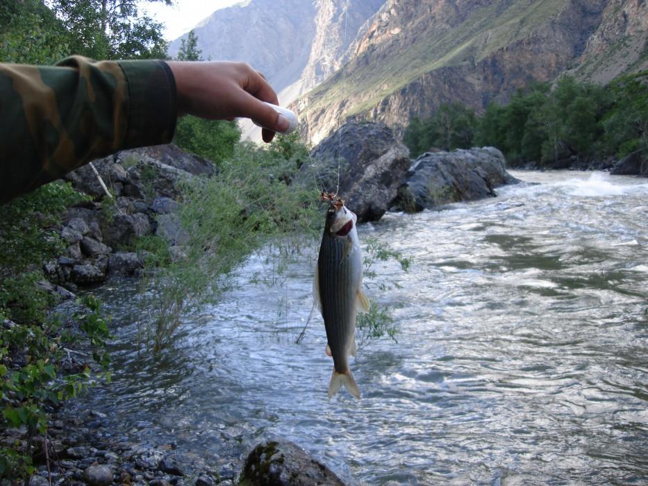 Рыбалка на чулышмане на алтае